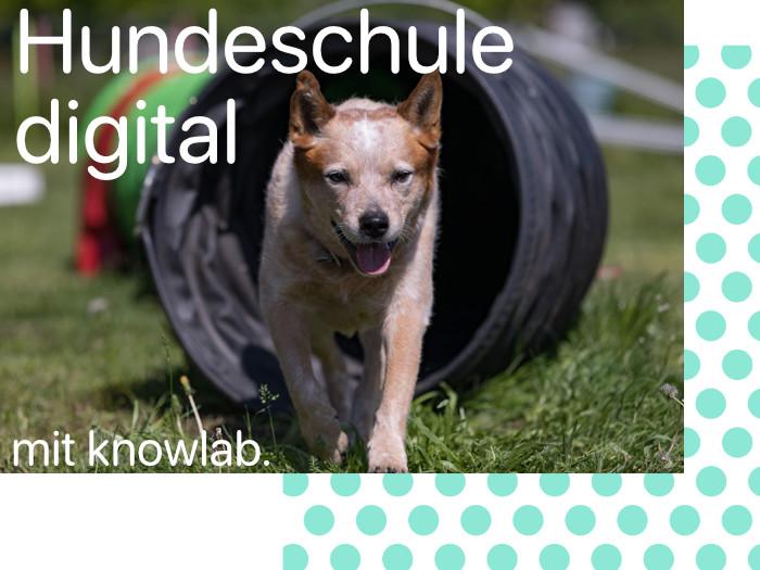 Hundeschule digital